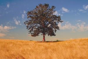 tree 1000